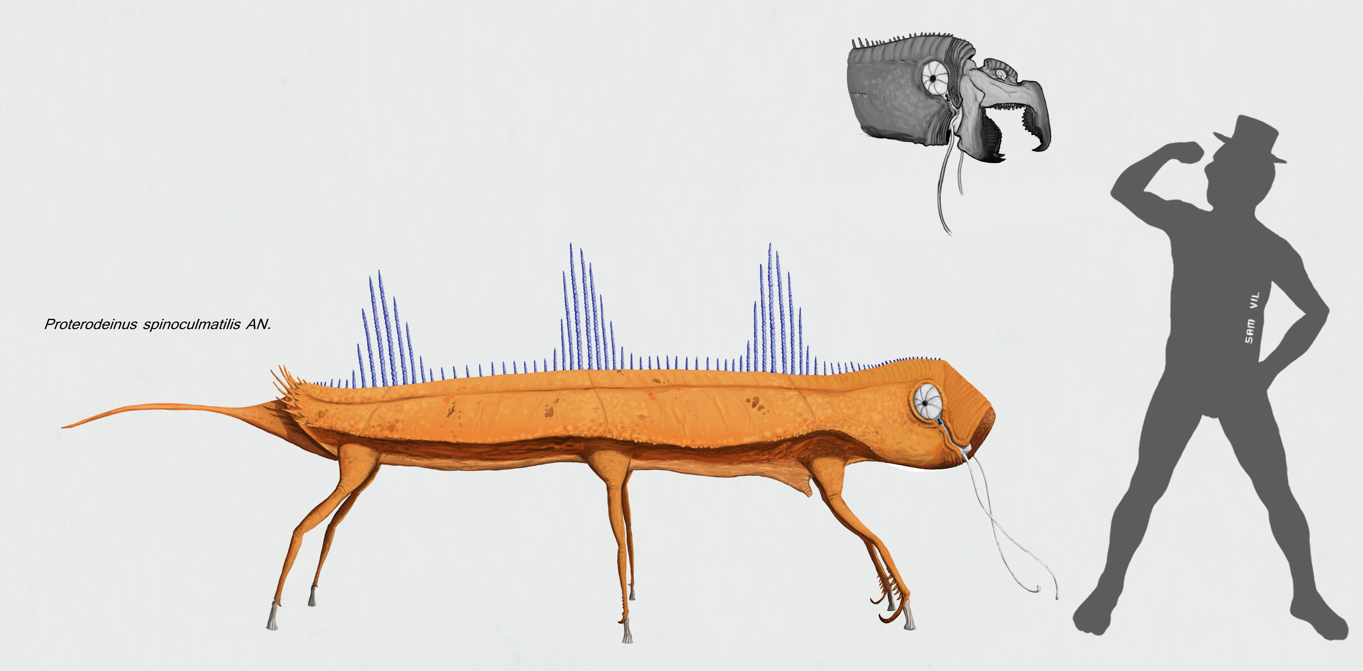 Proterodeinus spinoculmatilis by Sanrou