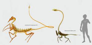 Centauromorphae (sortida)