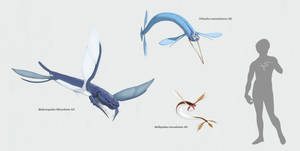 Blandoptera - I