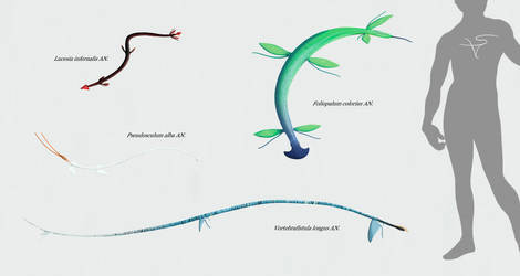 Blandoptera - II
