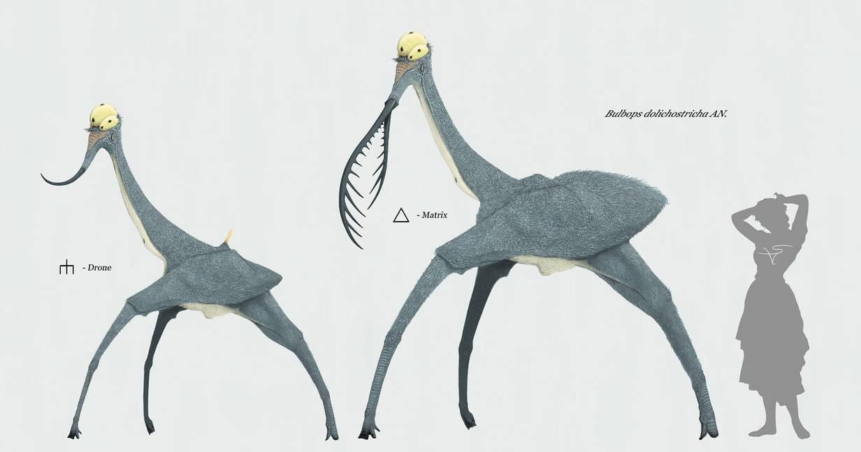 Bulbops dolichostricha by Sanrou