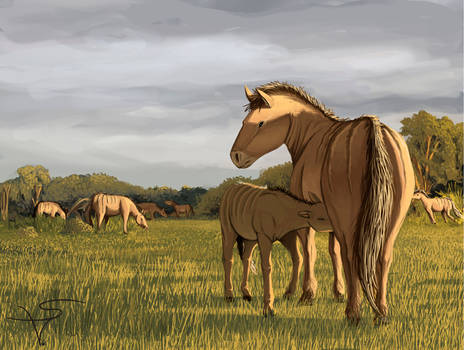 Equus vandonii