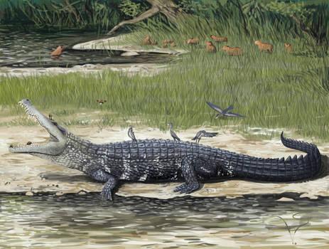 Melanosuchus sp and Hydrochoerus sp