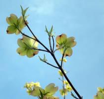 Blooming by PandasAreMine