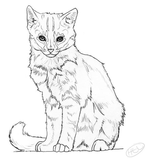 Line Drawing Kitten : Kitten lineart by heavenhel on deviantart