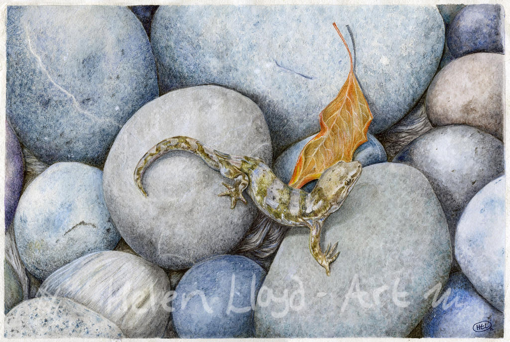 Gecko on Rocks by heavenhel