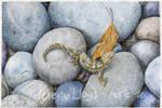 Gecko on Rocks by CatAclysmArt