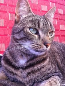 Aradria's Profile Picture
