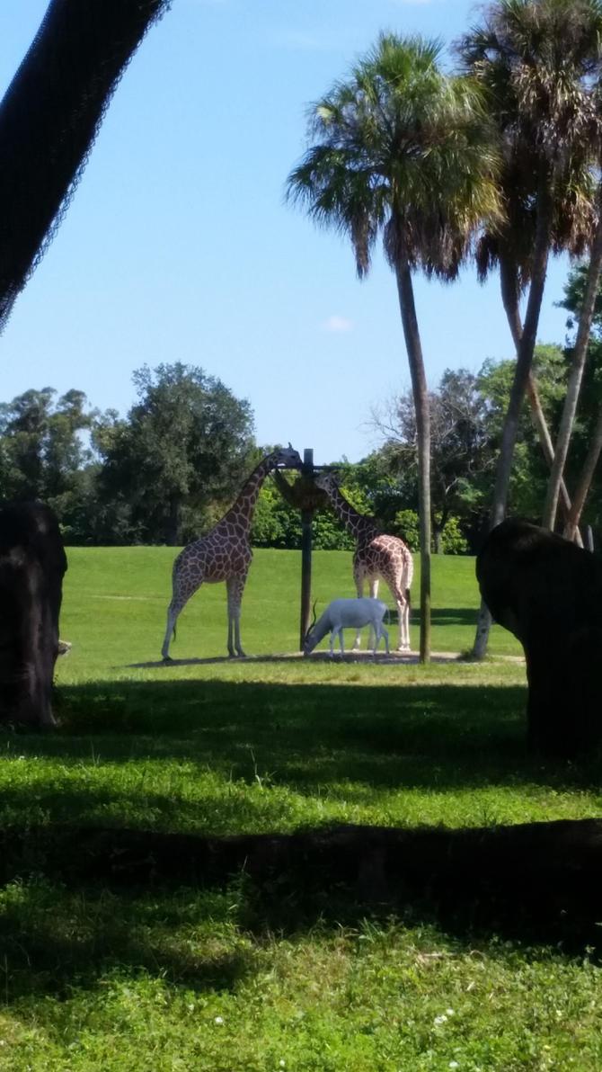 Giraffes by RenVortex