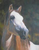 portrait stallion by anna36