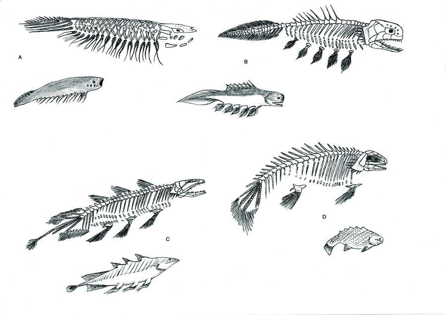Gossipiboman Fish Bones by PousazPower on DeviantArt