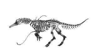 Pescidon Skeleton
