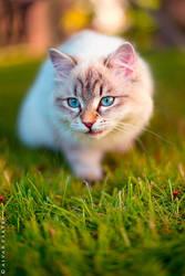 Cat by AivarPartel