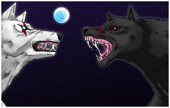 .:Wolf Fight: Shiro VS Kuro:. by Kiaki--chan