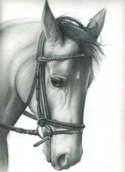 Horse portrait: Illusion