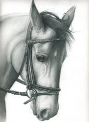 Horse portrait: Illusion by Mliss