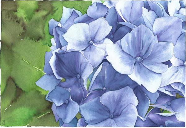 Blue Hydrangea - Aquamarkers