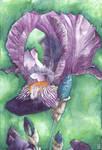 Purple Iris flower - Aquamarkers
