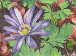 Purple Anemone flower - Aquamarkers