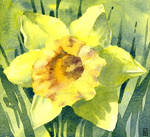 Spring Daffodil - Watercolour painting by GeeMassamArt