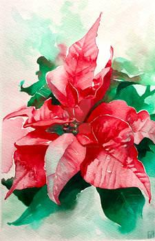 Red Poinsettia in Watercolour