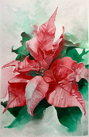 Red Poinsettia in Watercolour by GeeMassamArt