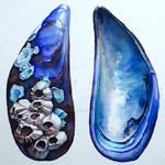Blue Mussel Shells - watercolour by GeeMassamArt