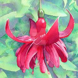 Red Fuchsia - Watercolour