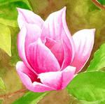 Pink Magnolia flower - Arteza watercolors by GeeMassamArt