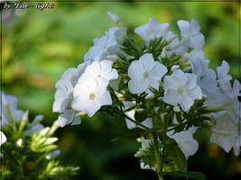 White amid the greenery by Esse-light