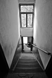Stairs, window and dog