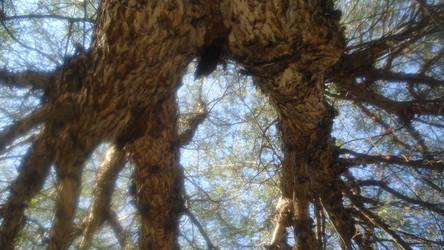 Tree by Ixtlelic