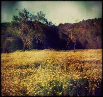 summertime DaiSies.. by TreMenda
