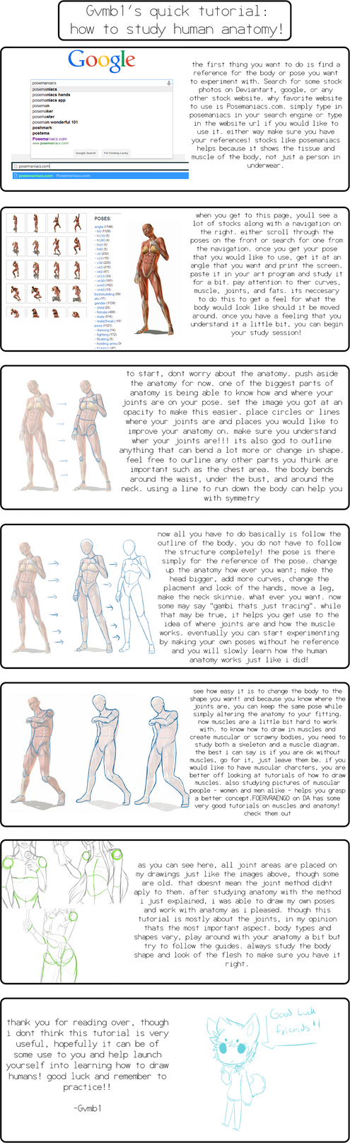 How To Study Human Anatomy By X Al3x On Deviantart
