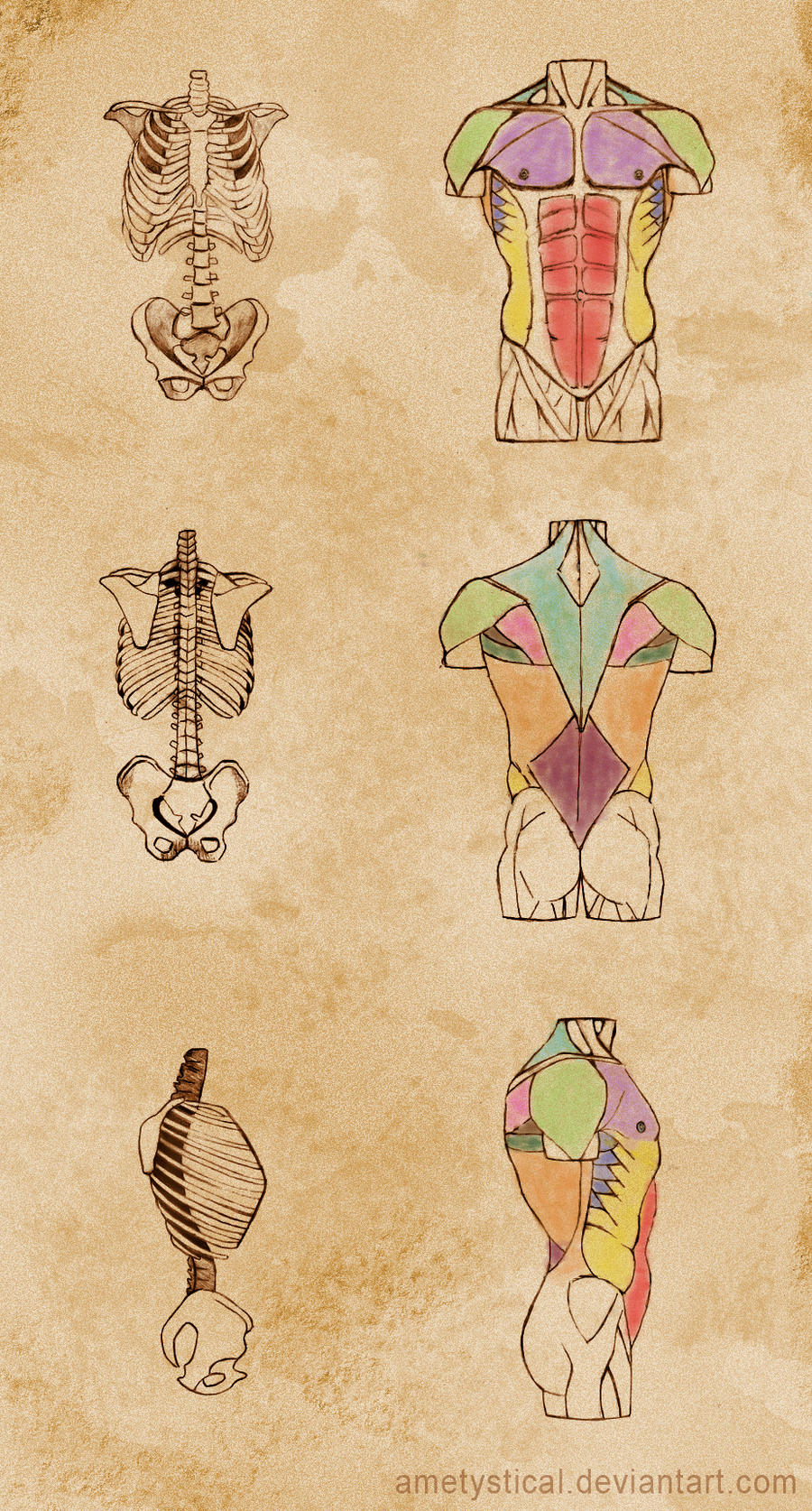 Torso Study by Ametystical