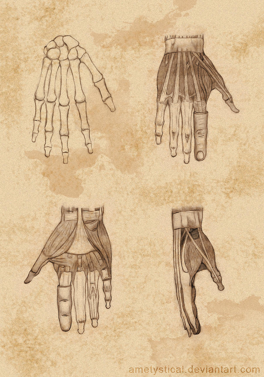 (Right) Hand Study by Ametystical