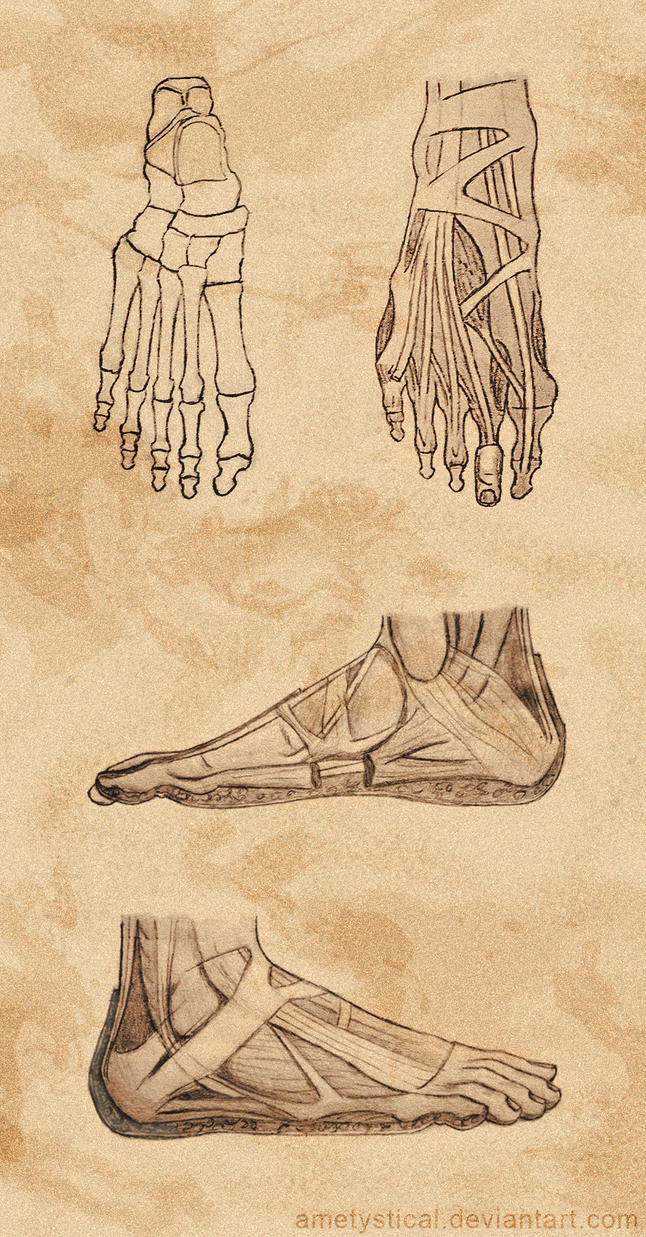 (Right) Foot Study by Ametystical