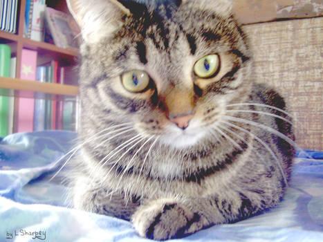 Ve lovely kitten [2]
