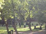 cemetery-stock7.