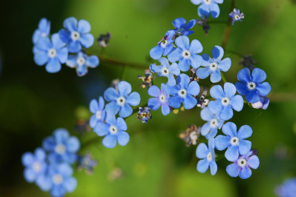 petites fleurs bleues by citadin on deviantart. Black Bedroom Furniture Sets. Home Design Ideas