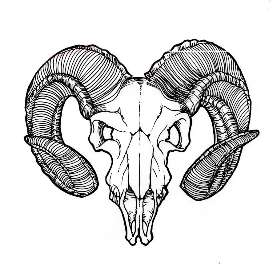 Goat Skull by Asteer