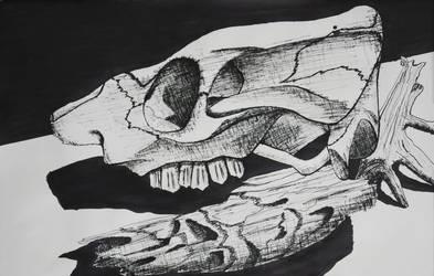 Skull and Driftwood