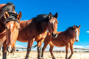 Desert Trio