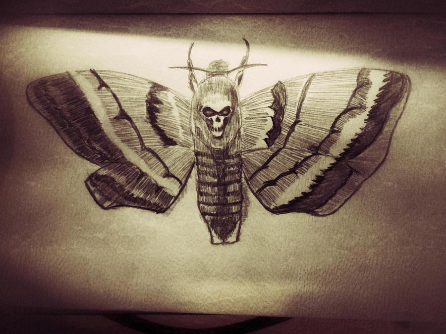 Death Head Moth  - Sketch by DarkWolf80s