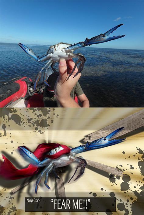 Ninja crab manip lol by DarkWolf80s