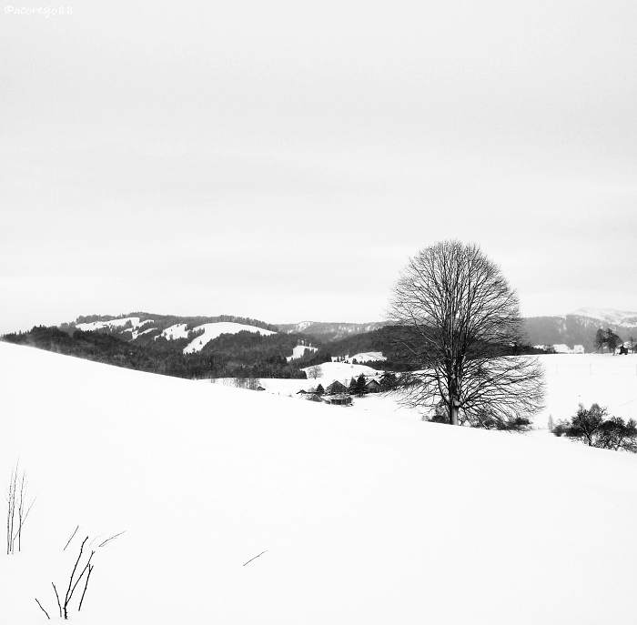 winter white by acoresjo88