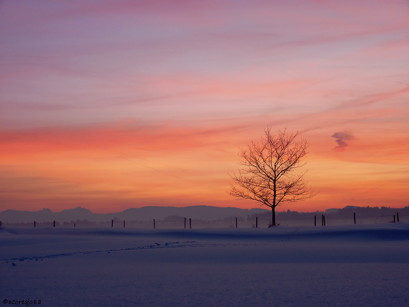 lonely tree II by acoresjo88