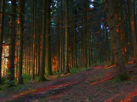 radiated wood by acoresjo88