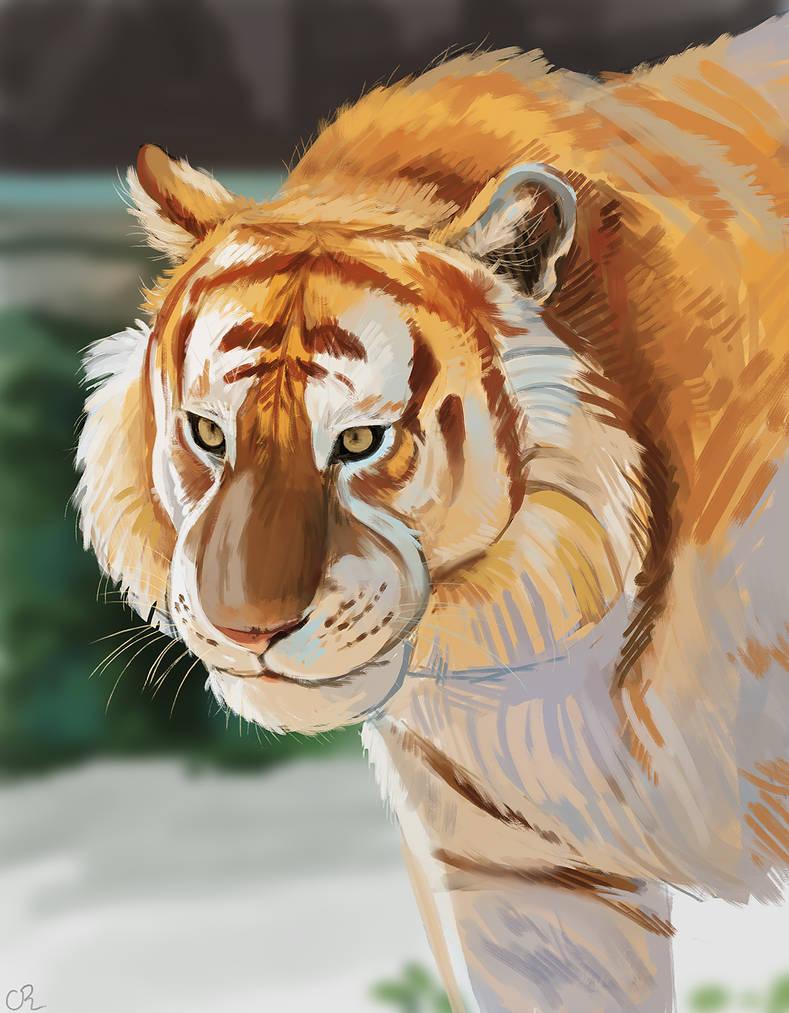 Tiger Study by Xishka