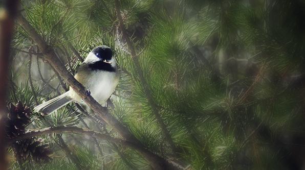 Bird by xtruthpath